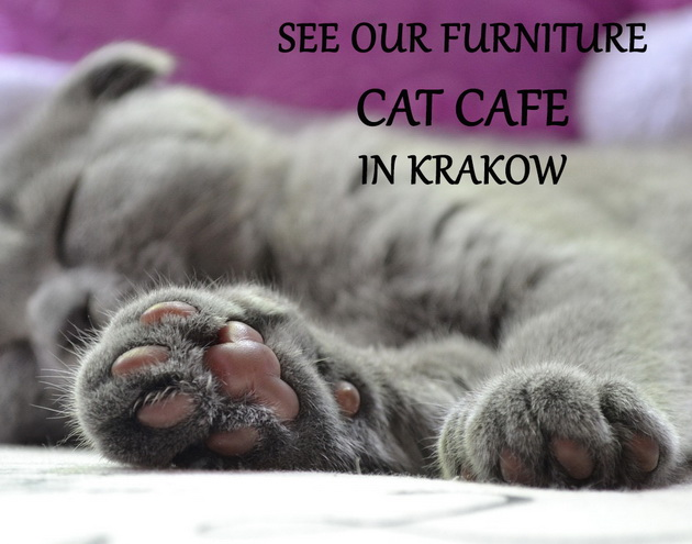 cat cafe in krakow